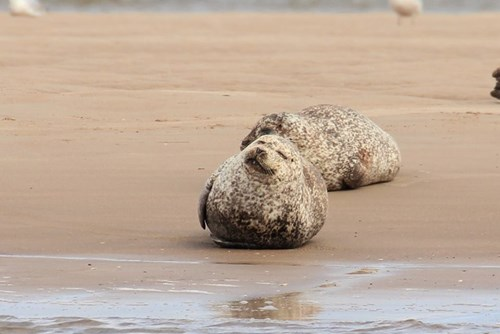 Findhorn's Seal Colony