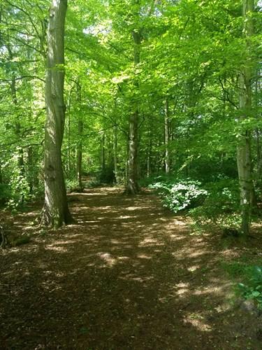 Culduthel Woods - Plant List