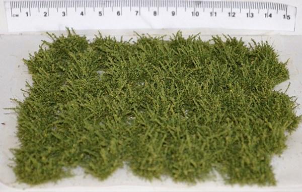 Plain Green bushes (TM30)