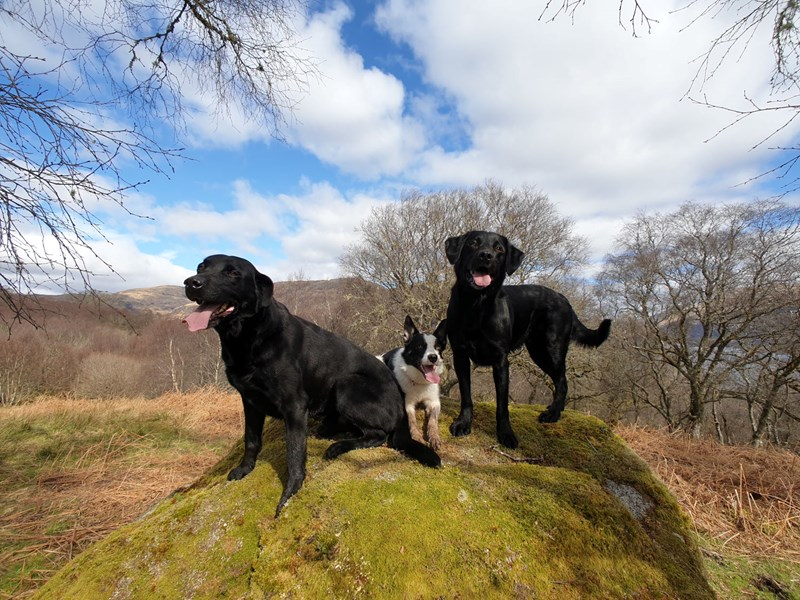 Picture of our dogs on top of one of the near by hills