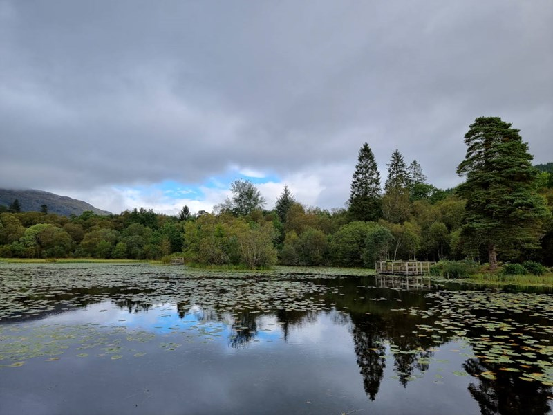 Lily fishing ponds at Inverawe