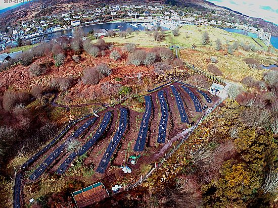 View of orchard from drone - Theo Andrews