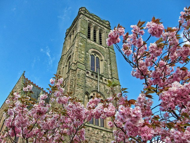 Branches of pink blossom in front of upward looking view of a stone church spire